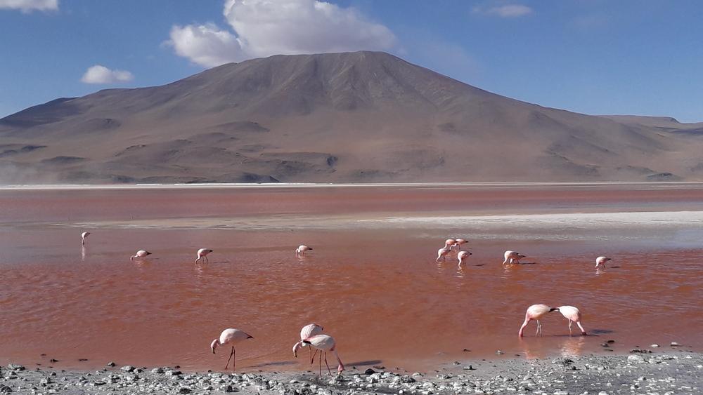 Bolivia viaggi speciali di gruppo 2020