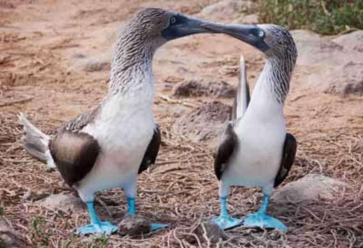 Ecuador -  Tutto Galapagos