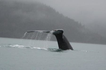 Alaska e isole Pribilof