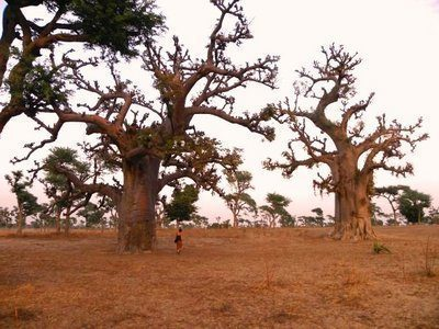 Senegal - Biodiversità