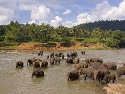 Sri Lanka - L'isola che risplende