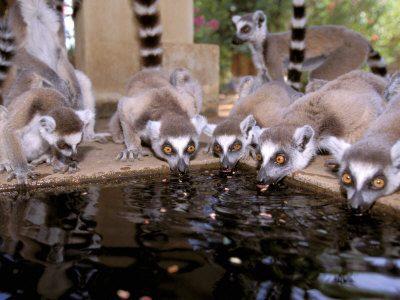 Madagascar - viaggio della Biodiversità