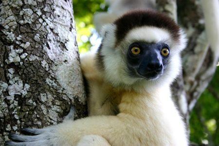 Madagascar con accompagnatori locali