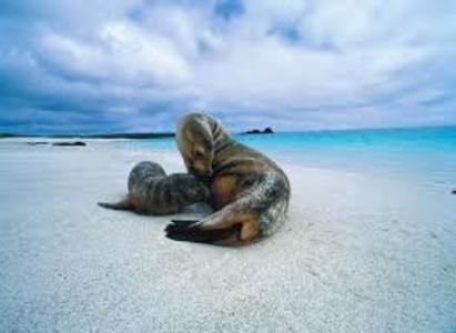 Perù -  Galapagos