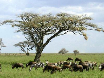 Burundi e parco Katavi (Tanzania)